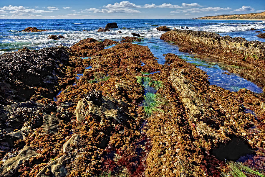 California Photograph - Crystal Cove Tide Pools  by Donna Pagakis