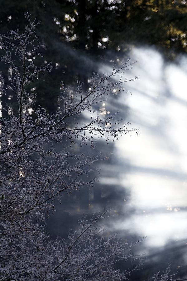Sunburst Ice Crystal Trees Photograph