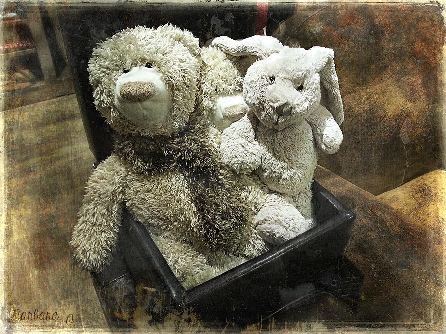 Teddy Photograph - Cuddle Toys by Barbara Orenya