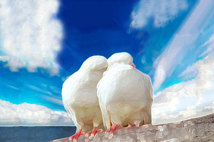 Doves Photograph - Cuddling by Bruce Iorio