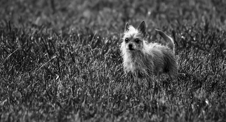 Photograph - Cujo by Brian Stevens