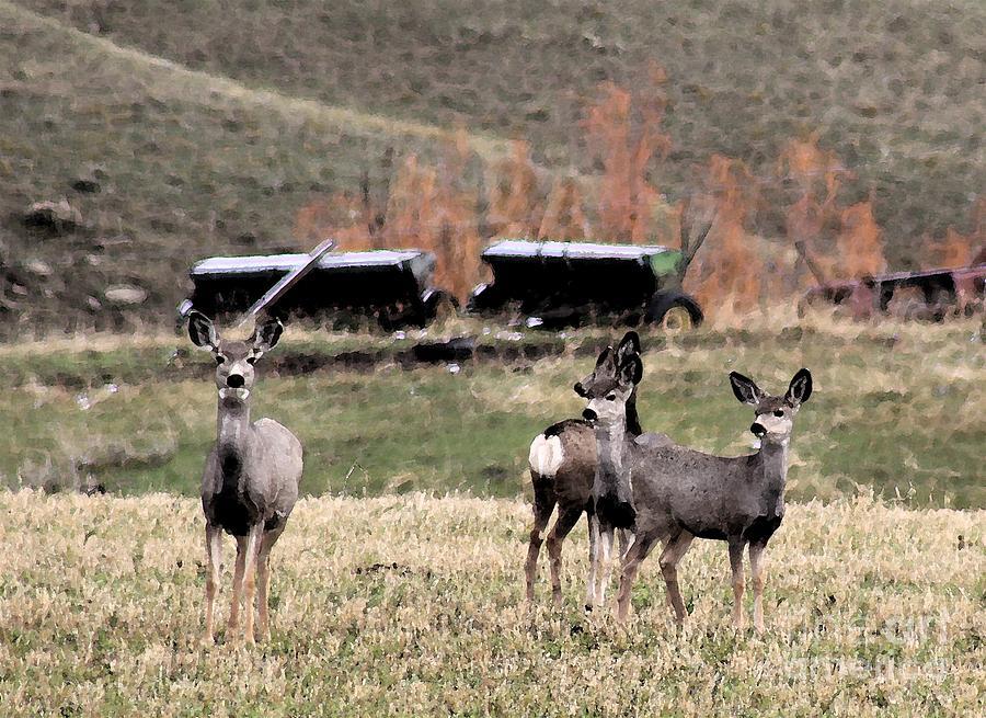 Deer Photograph - Curiosity by Brenda Henley