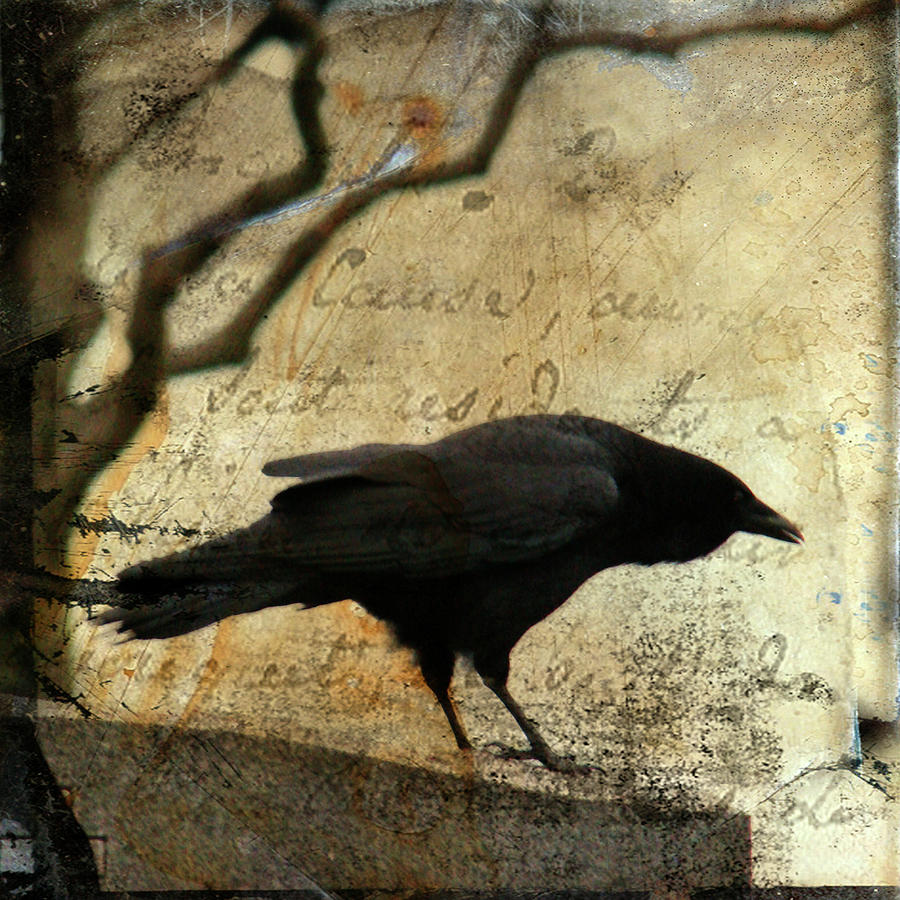 Blackbird Digital Art - Curious Crow by Gothicrow Images