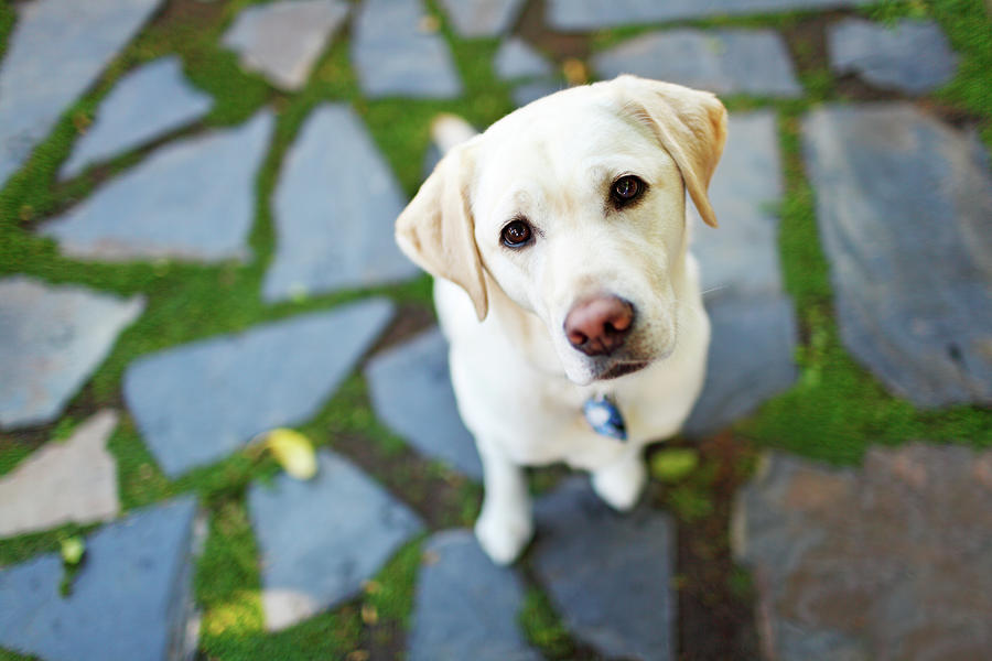 Curious Dog Looking Up Photograph by Purple Collar Pet Photography