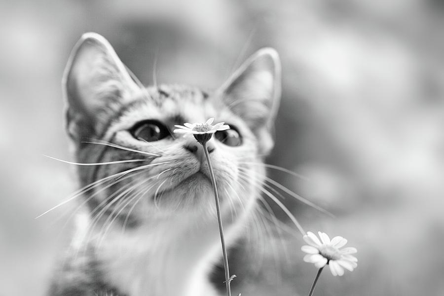 Cat Photograph - Curious by Mirjam Delrue