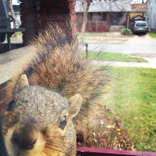 Squirrel Photograph - Curious Squirrel by Christy Beckwith