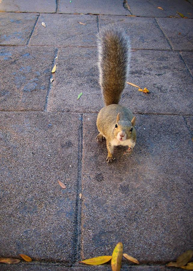 Animal Photograph - Curious Squirrel by Michele Stoehr