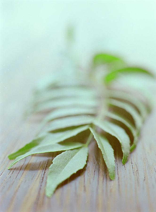 Curry Leaves Photograph by Romulo Yanes