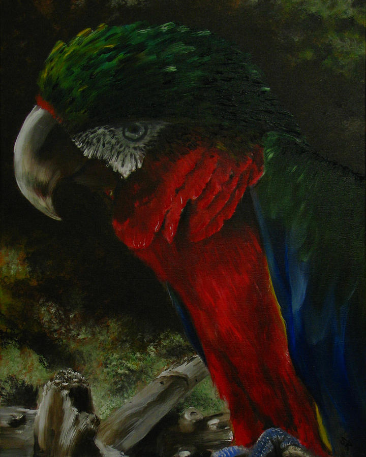 Bird Painting - Curtis The Parrot by Sherry Robinson