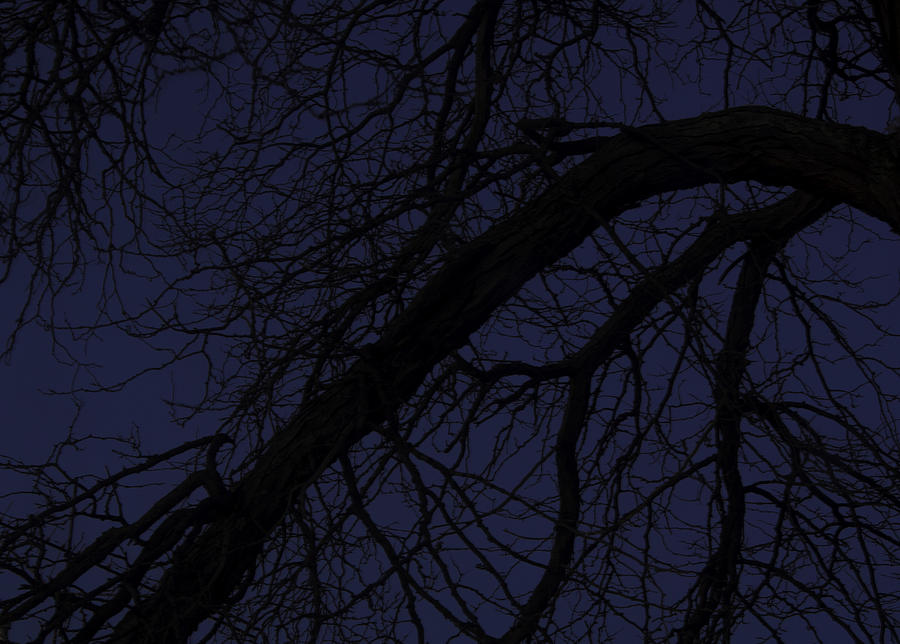 Dusk Photograph - Curved Branch at dusk by Nathan Seavey