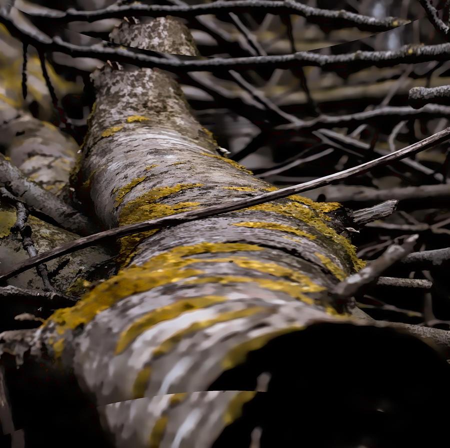 Sweden Photograph - Curves  Leif Sohlman by Leif Sohlman