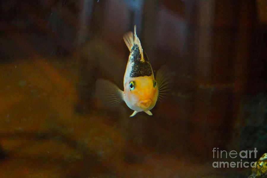 Cute Tropical Fish Photograph - Cute And Content by Byron Varvarigos