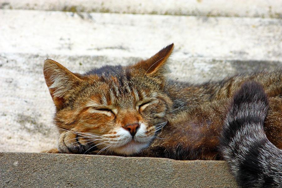 Animal Photograph - Cute Cat by Borislav Marinic