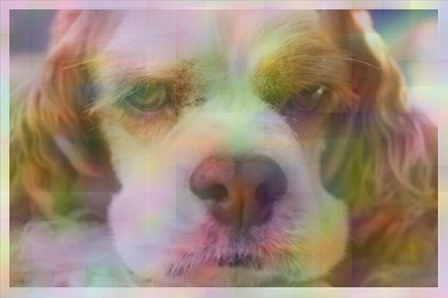 Dog Digital Art - Cute Dog I by Micaela Pazuello Mica