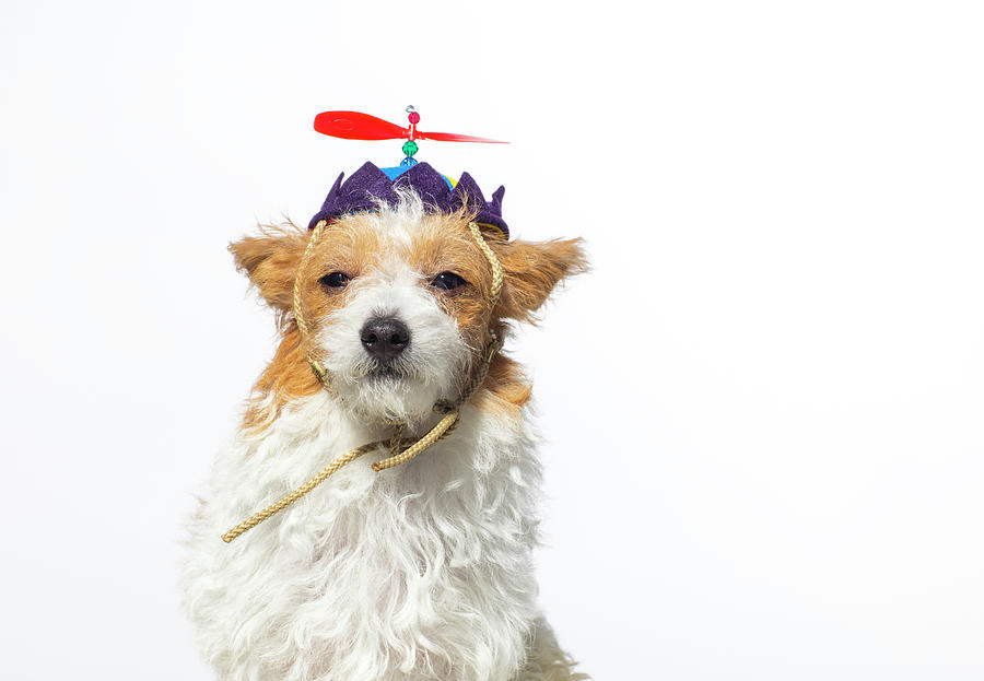 Cute Dog With Propeller Hat - The Photograph by Amandafoundation.org