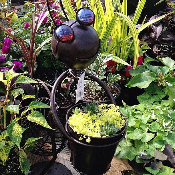 Plants Photograph - Cute Insect Planter! #plants #planters by Teresa Mucha