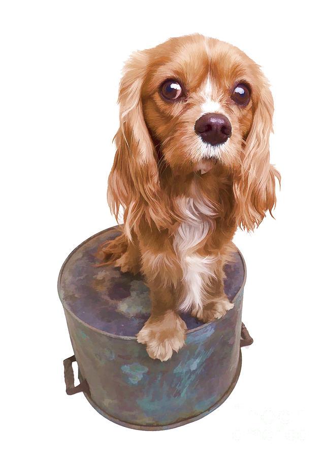 Puppy Photograph - Cute Puppy Card by Edward Fielding