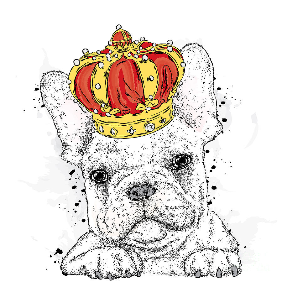 Typography Digital Art - Cute Puppy Wearing A Crown. French by Vitaly Grin