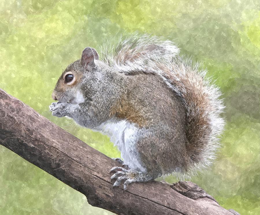Cute Squirrel Painting By Gianfranco Weiss