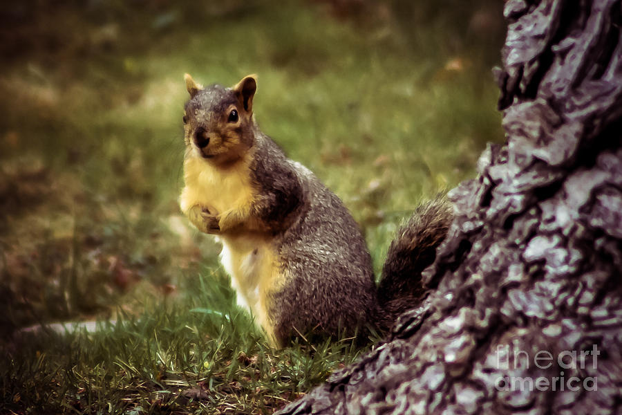 Squirrel Photograph - Cute Squirrel by Robert Bales