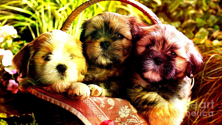 Puppies Mixed Media - Cute Terrier Puppies by Marvin Blaine