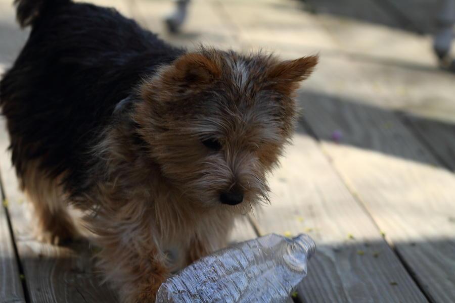Dog Photograph - Cutest Dog Ever - Animal - 011311 by DC Photographer