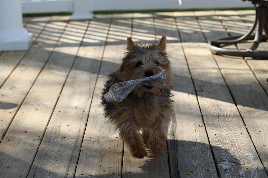 Dog Photograph - Cutest Dog Ever - Animal - 01134 by DC Photographer