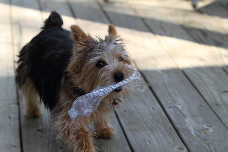 Dog Photograph - Cutest Dog Ever - Animal - 01135 by DC Photographer