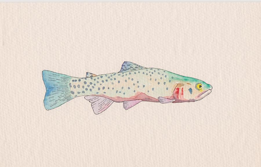 Fish Drawing - Cutthroat Trout by Stephen Moore