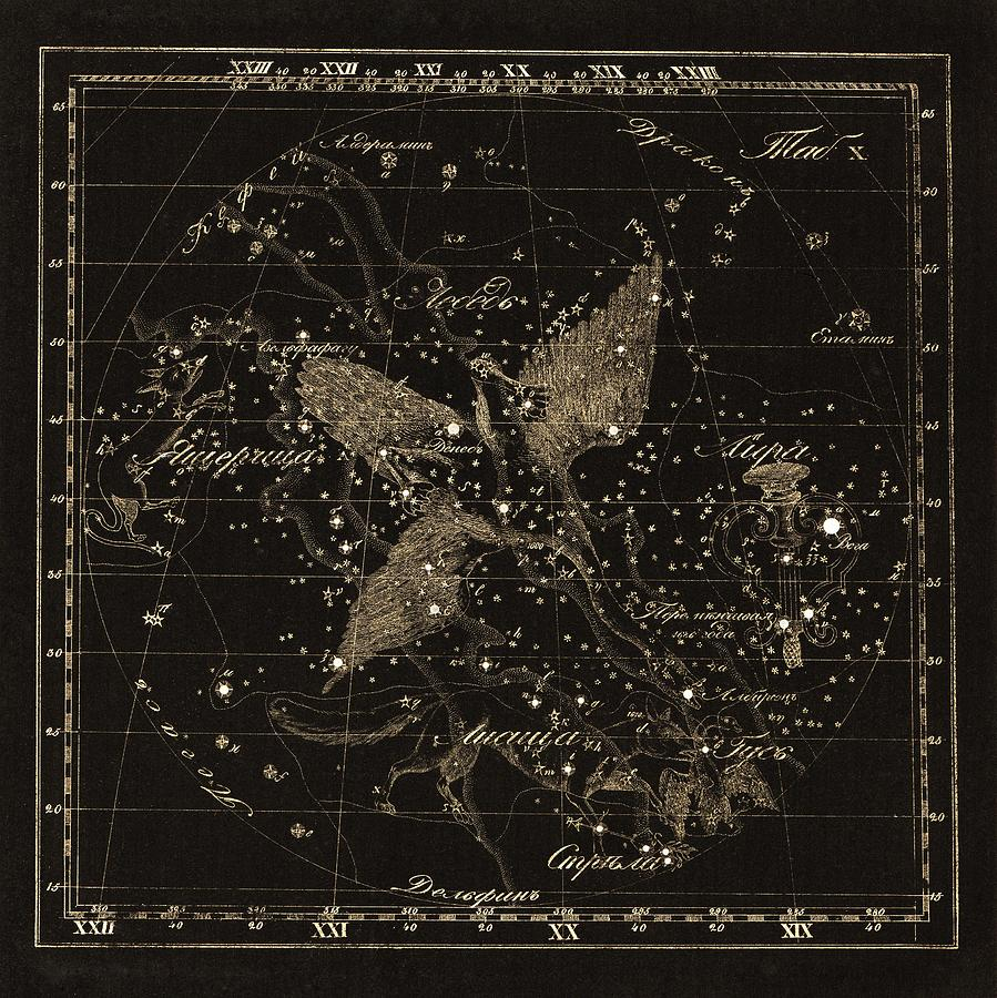 Cygnus Photograph - Cygnus Constellations, 1829 by Science Photo Library