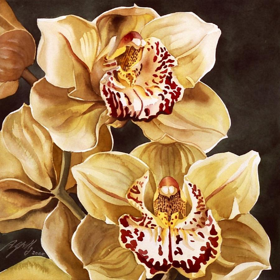 Watercolor Painting - Cymbidium Orchids by Alfred Ng