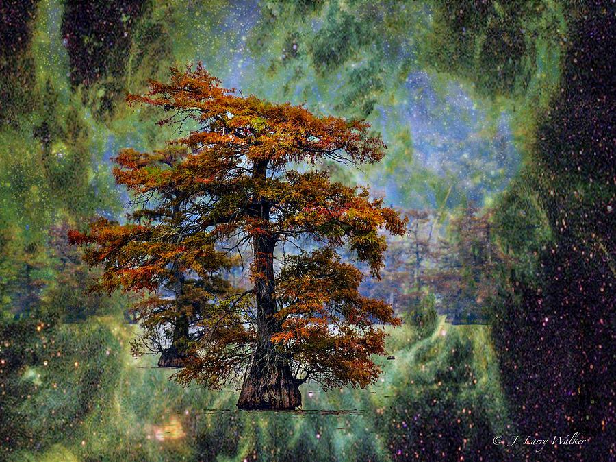 Cypress In All Its Glory by J Larry Walker