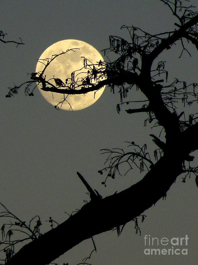 Yellow Moon Print Photograph - Cypress Moon by Joe Jake Pratt