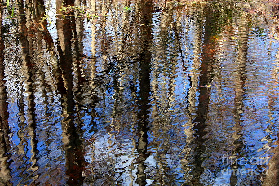 Nature Abstract Photograph - Cypress Reflection Nature Abstract by Carol Groenen