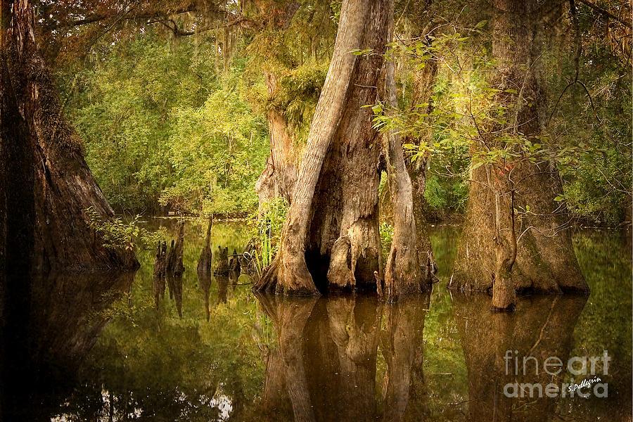 Water Photograph - Cypress  by Scott Pellegrin
