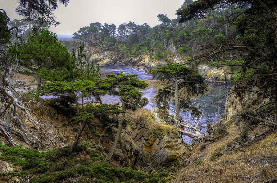 Point Lobos Photograph - Cypress by Stephen Campbell