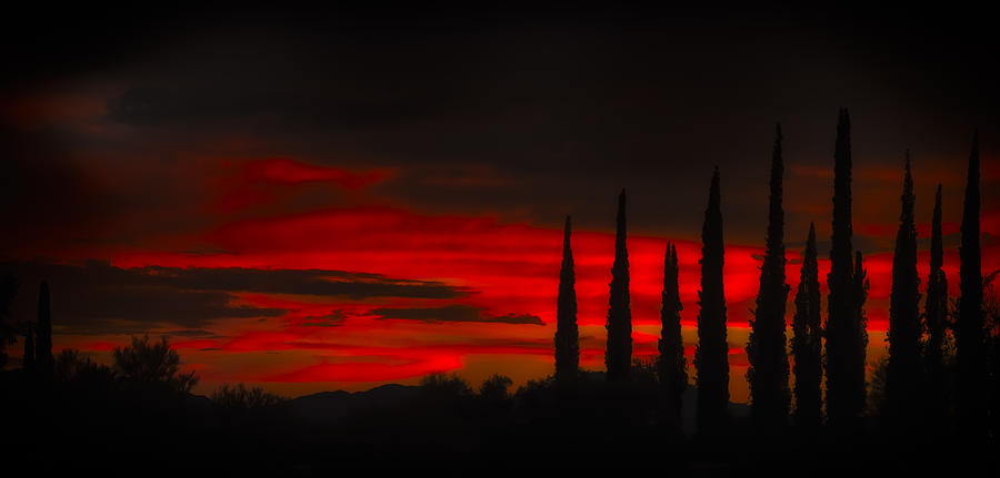 Cypress Sunset N0.2 Photograph