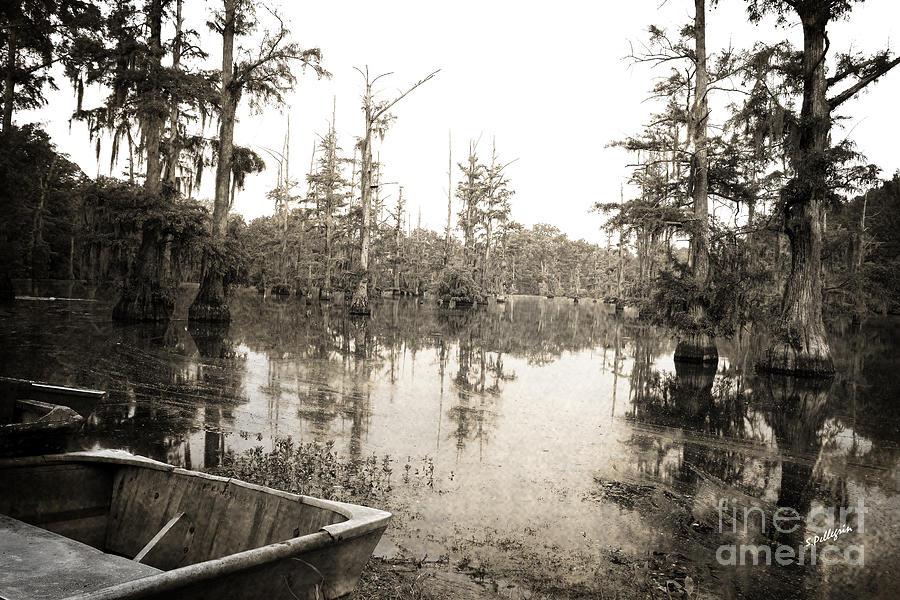 Swamp Photograph - Cypress Swamp by Scott Pellegrin