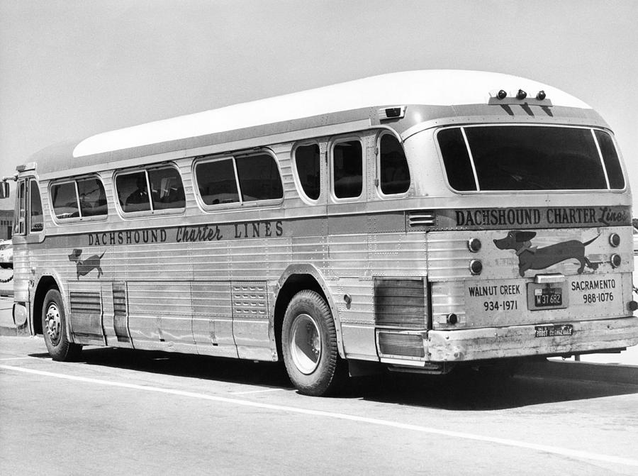 1958 Photograph - Dachshound Charter Bus Line by Underwood Archives