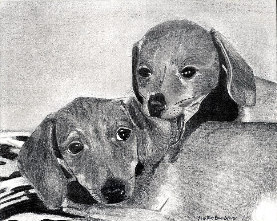 Dachshund Puppies Dog Portrait  Drawing by Olde Time  Mercantile