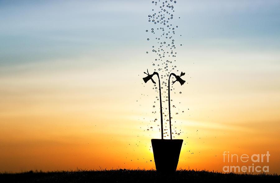 Flowerpot Photograph - Daffodil Dawn by Tim Gainey