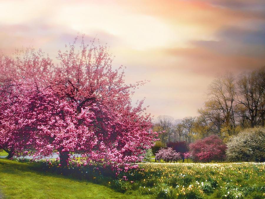 Landscape Photograph - Daffodil Hill by Jessica Jenney