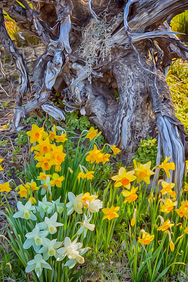 North Cascades Painting - Daffodils And Sculpture by Omaste Witkowski