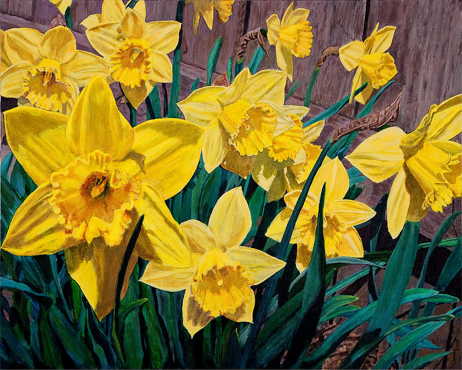 Daffodils Painting - Daffodils by Charlie Harris