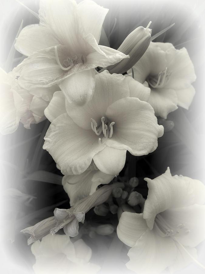 Daffodils Photograph - Daffodils Emerge by Daniel Hagerman