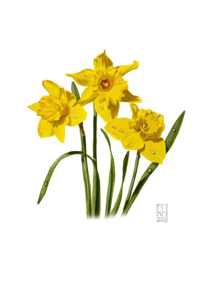 Daffodils Painting By Richard Harpum