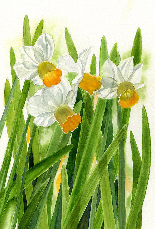 Daffodils Painting - Daffodils With Green Leaves by Sharon Freeman