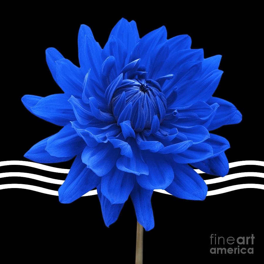 Bathroom Photograph - Dahlia Flower And Wavy Lines Triptych Canvas 2 - Blue by Natalie Kinnear