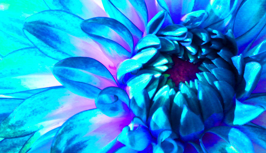 Dahlia Photograph - Dahlia In Pastel by James Hammen