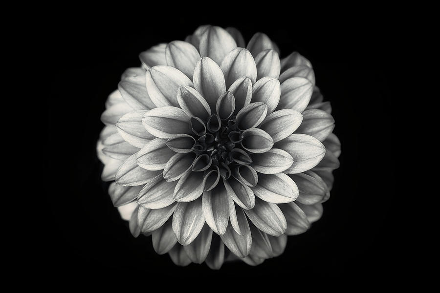 Flower Photograph - Dahlia by Lotte Gr?nkj?r